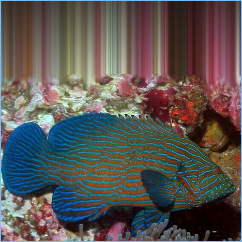 Blue Line Grouper Fish