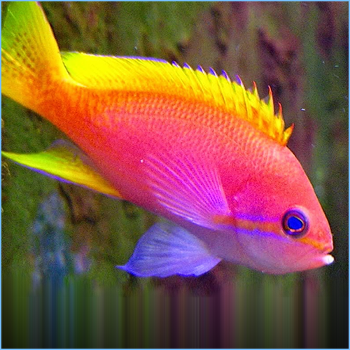 Lyretail Anthias Fish Male